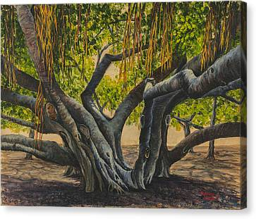 Banyan Tree Maui Canvas Print