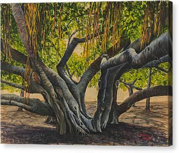 Banyan Tree Maui Canvas Print