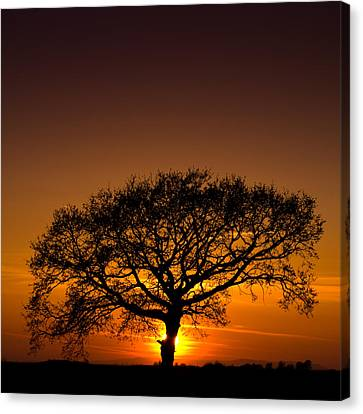 Baobab Canvas Print by Davorin Mance