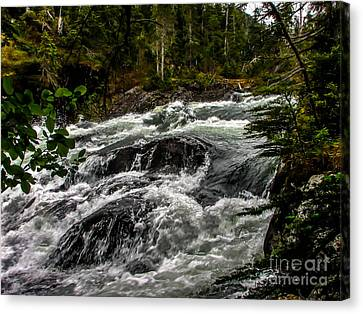Baranof River Canvas Print by Robert Bales