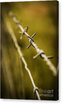Barbed Wire Canvas Print by Carlos Caetano