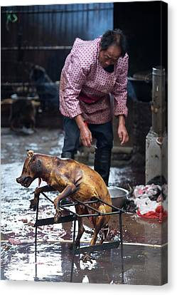 Barbecued Dog Carcass In A Chinese Market Canvas Print by Tony Camacho