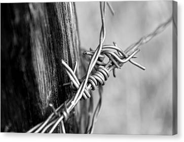 Barbed Bw Canvas Print