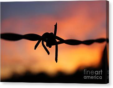 Canvas Print featuring the photograph Barbed Silhouette by Vicki Spindler