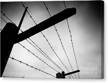 Barbed Wire Fence Canvas Print by Michal Bednarek