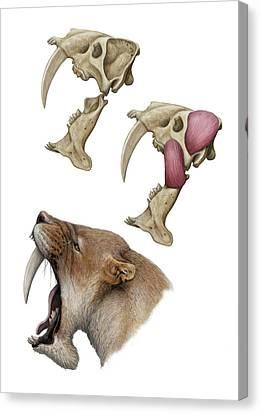 Barbourofelis Sabre-toothed Cat Canvas Print by Mauricio Anton