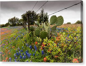 Barbs Needles And Flowers Canvas Print