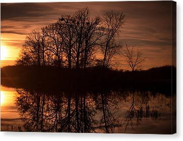 Canvas Print featuring the photograph Bare Beauty by Jason Naudi Photography
