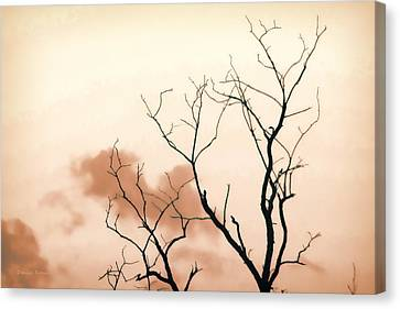 Bare Limbs Canvas Print by Denise Romano
