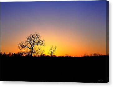 Bare Oak In Spring Sunset Canvas Print