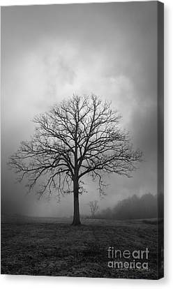 Bare Tree And Clouds Bw Canvas Print by Dave Gordon