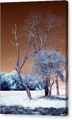 Bare Tree Cahokia Canvas Print by Bob Pomeroy