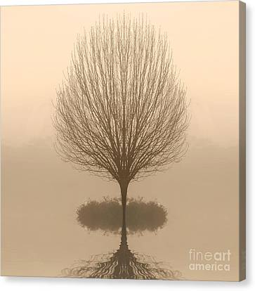 Bare Tree In Fog At Dawn Canvas Print by Cheryl Casey