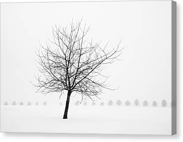 Bare Tree In Winter - Wonderful Black And White Snow Scenery Canvas Print by Matthias Hauser