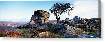 Bare Tree Near Rocks, Haytor Rocks Canvas Print by Panoramic Images