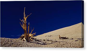 Bare Tree On A Landscape, Usa Canvas Print by Panoramic Images