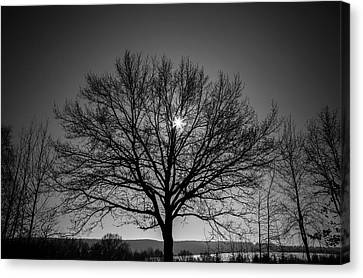 Bare Tree Canvas Print by Wladimir Bulgar