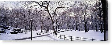 Bare Trees During Winter In A Park Canvas Print by Panoramic Images