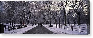 Bare Trees In A Park, Central Park, New Canvas Print by Panoramic Images