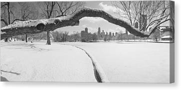 Bare Trees In A Park, Lincoln Park Canvas Print by Panoramic Images