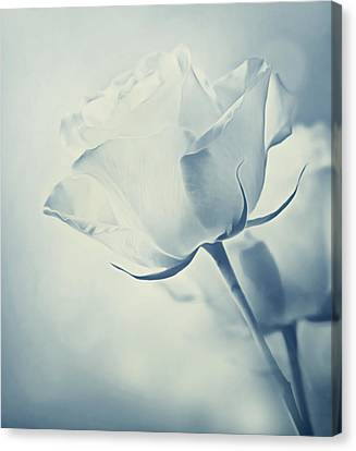 Barely There Rose Canvas Print