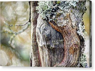 Bark And Bokeh Canvas Print by Chris Anderson
