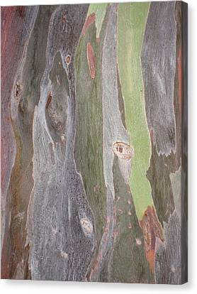Canvas Print featuring the photograph Bark Of Tree, San Juan by Jean Marie Maggi