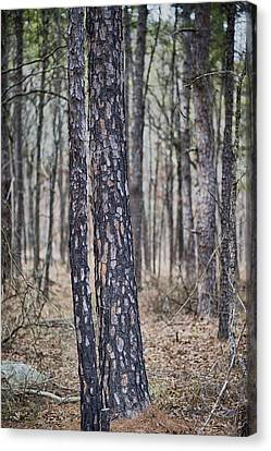 Canvas Print featuring the photograph Bark by Yvonne Emerson AKA RavenSoul