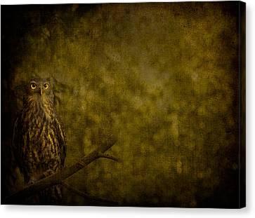 Barking Owl Canvas Print by Shari Mattox