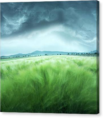 Romania Canvas Print - Barley Field by Floriana Barbu
