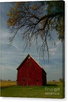 Barn And Box Elder Canvas Print by Tim Good