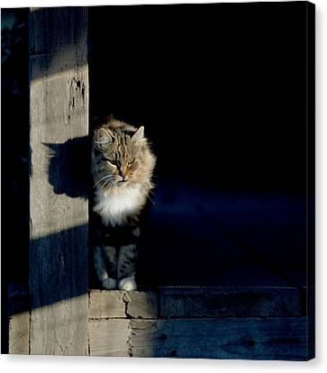 Barn Cat Canvas Print by Art Block Collections