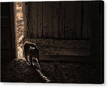 Barn Cat Canvas Print