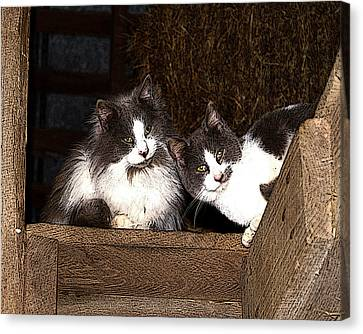 Barn Cats Canvas Print by TnBackroadsPhotos