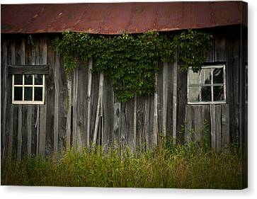 Barn Eyes Canvas Print by Shane Holsclaw