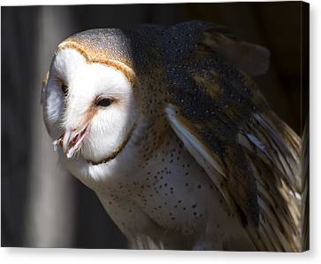 Barn Owl 1 Canvas Print by Chris Flees