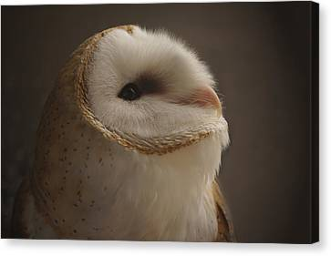 Barn Owl 4 Canvas Print