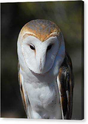 Canvas Print featuring the photograph Barn Owl by Avian Resources