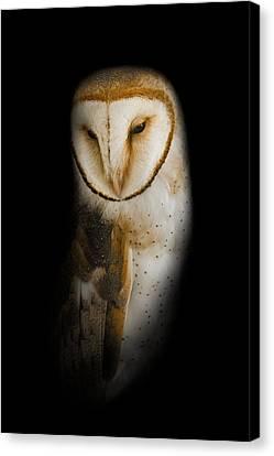 Barn Owl Canvas Print by Bill Wakeley