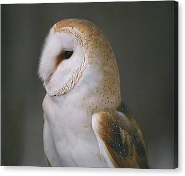 Canvas Print featuring the photograph Barn Owl by David Porteus