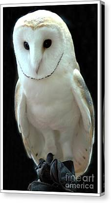 Barn Owl. Canvas Print by Kathleen Struckle