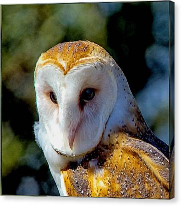 Canvas Print featuring the photograph Barn Owl Portrait by Constantine Gregory
