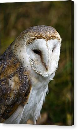 Barn Owl Canvas Print by Scott Carruthers