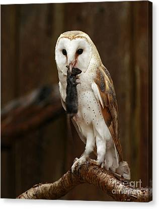 Barn Owl With Catch Of The Day Canvas Print by Inspired Nature Photography Fine Art Photography