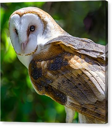 Canvas Print featuring the photograph Barn Owl by Yeates Photography