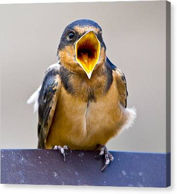 Canvas Print featuring the photograph Barn Swallow by Ricky L Jones