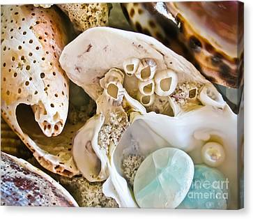 Barnacles And Shells Canvas Print by Colleen Kammerer