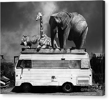 Barnum And Bailey Goes On A Road Trip 5d22705 Black And White Canvas Print by Wingsdomain Art and Photography