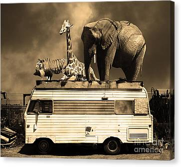 Barnum And Bailey Goes On A Road Trip 5d22705 Sepia Canvas Print by Wingsdomain Art and Photography