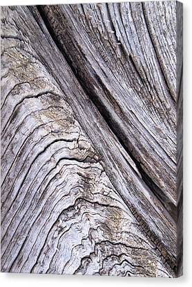 Illinois Barns Canvas Print - Barnwood...weathered by Tom Druin